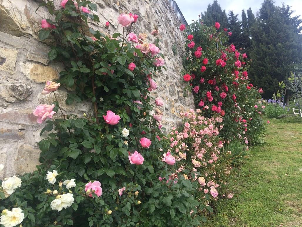 Rosengarten Toskana Ferienwohnung