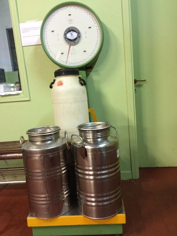 Contenedores de acero de aceite de oliva en la báscula