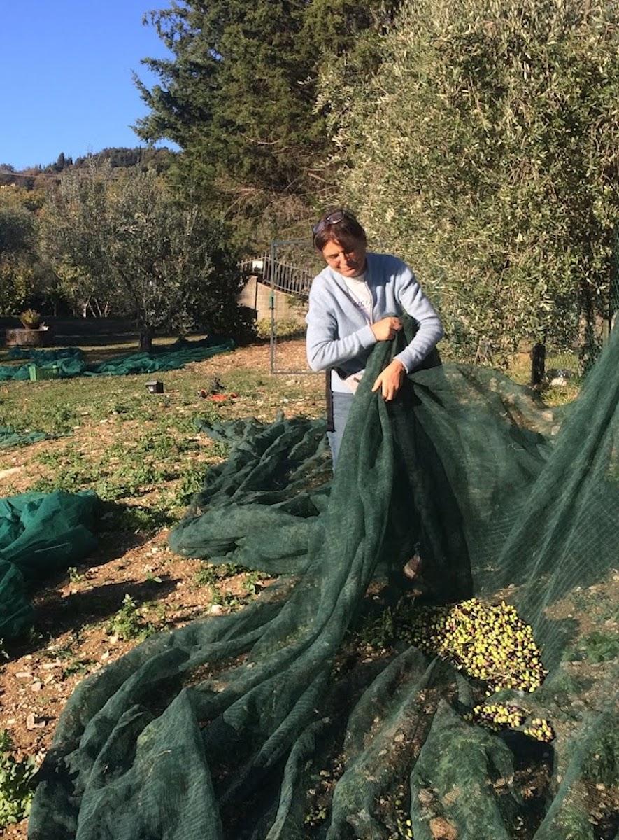 reti per raccolta olive - Agriturismo Florence Villa Violetta
