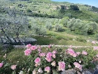 Giardino dell'agriturismo Florence Villa Violetta