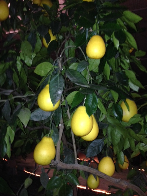 200 different kinds of citrus and exotic varieties